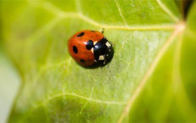 Kerti állatok, növények