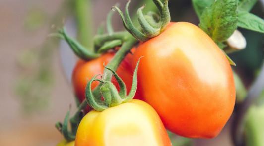Mikor melyik zöldséget kell vetni?